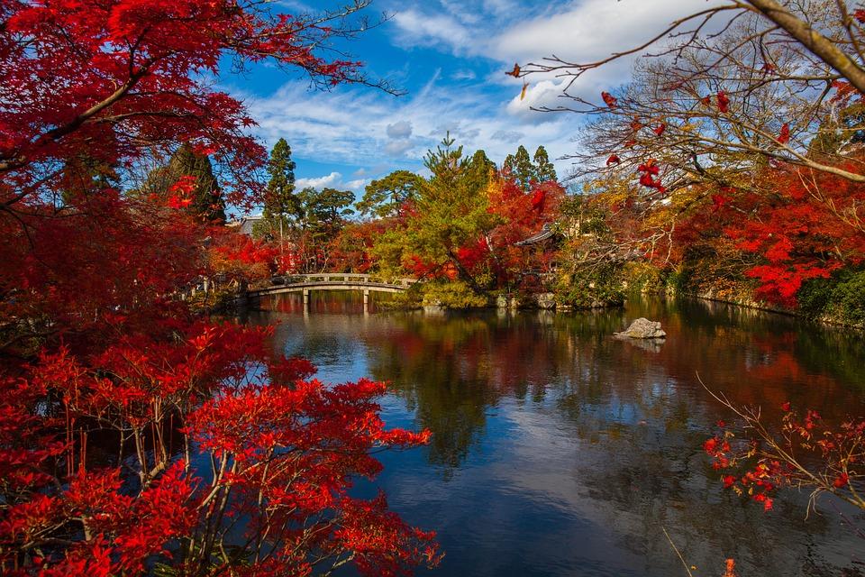 Brücke mit roten Bäumen